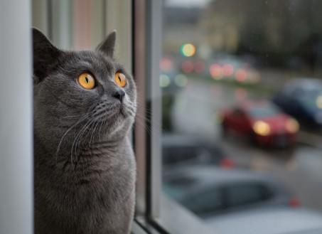 Clôture de protection pour chat bienvenue - Protection pour chat ...
